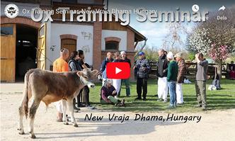 VIDEO - Ox Training Seminar, New Vraja Dhama Hungary
