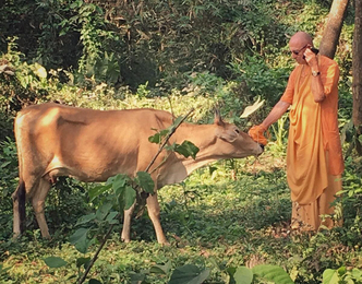 What Are You Doing for Cow Protection? by HH Sivarama Swami