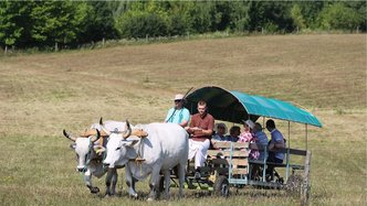 8,000 Learn About Simple Living, High Thinking at Krishna Valley Fair